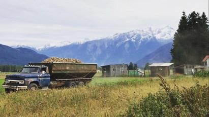 BF Potato Harvest