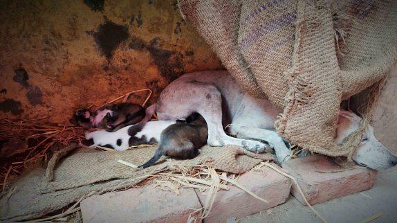 Delhi Puppies
