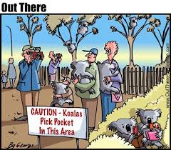 pickpockets koala