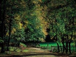foresta umba