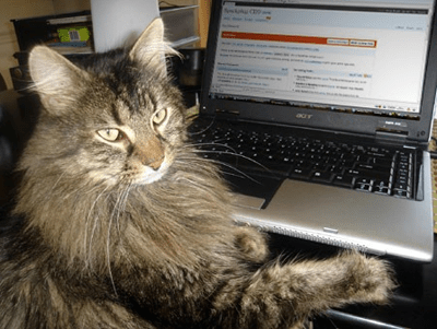 catwriter.png
