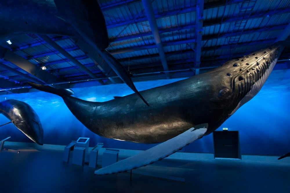 Whalesoficeland_exhibit_about_00