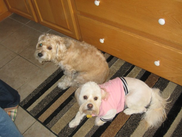 Daisy and her brother, Kody