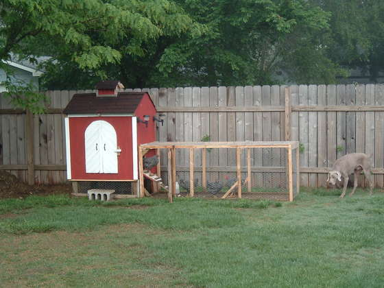 Chicken Coop with a Chicken Run