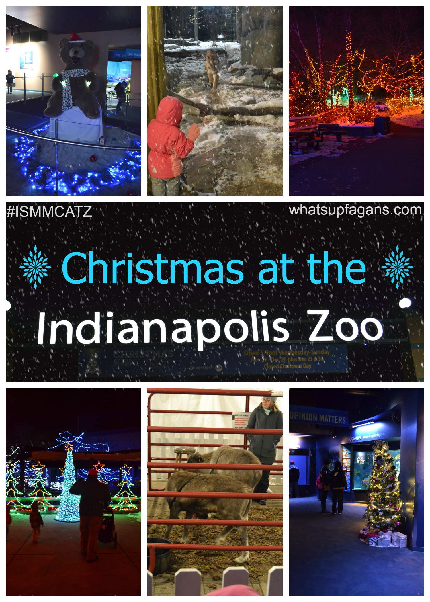 Christmas In Indianapolis.Christmas At The Indianapolis Zoo