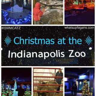 Christmas at the Zoo - An Indianapoils Zoo Holiday Tradition! Enjoy Christmas lights, sounds, shows, and more. whatsupfagans.com #ISMMCATZ