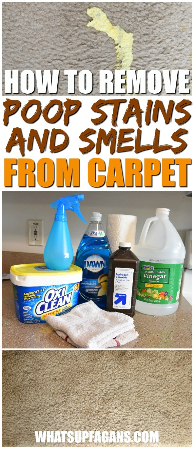 Remove Poop Stains and Smells from Carpets with this DIY Solution