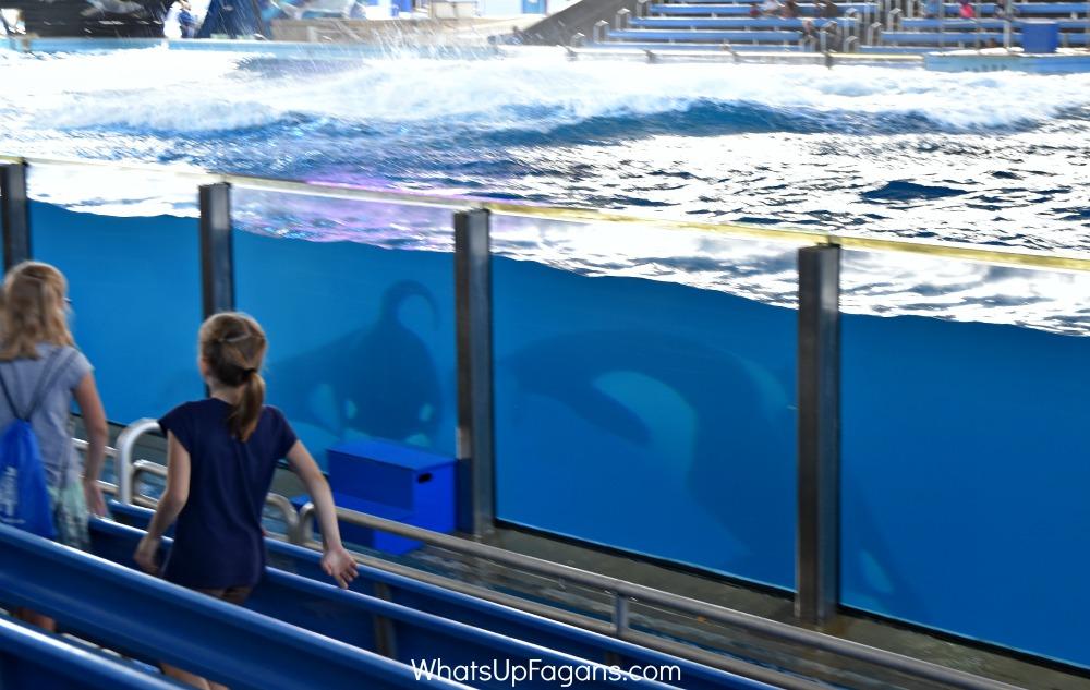sea world killer whales orcas shamu show