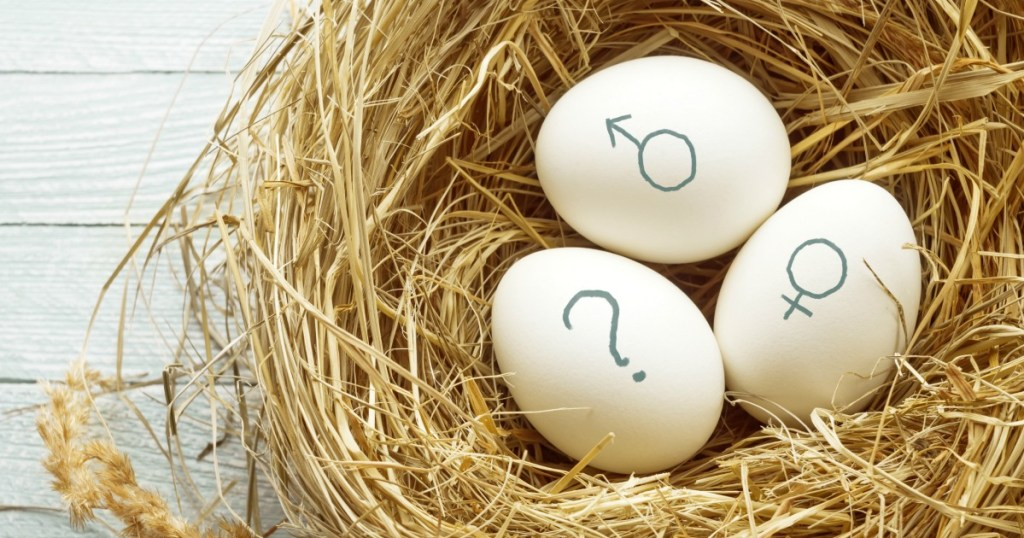cute gender reveal sayings | Eggs with symbols of genders and question mark