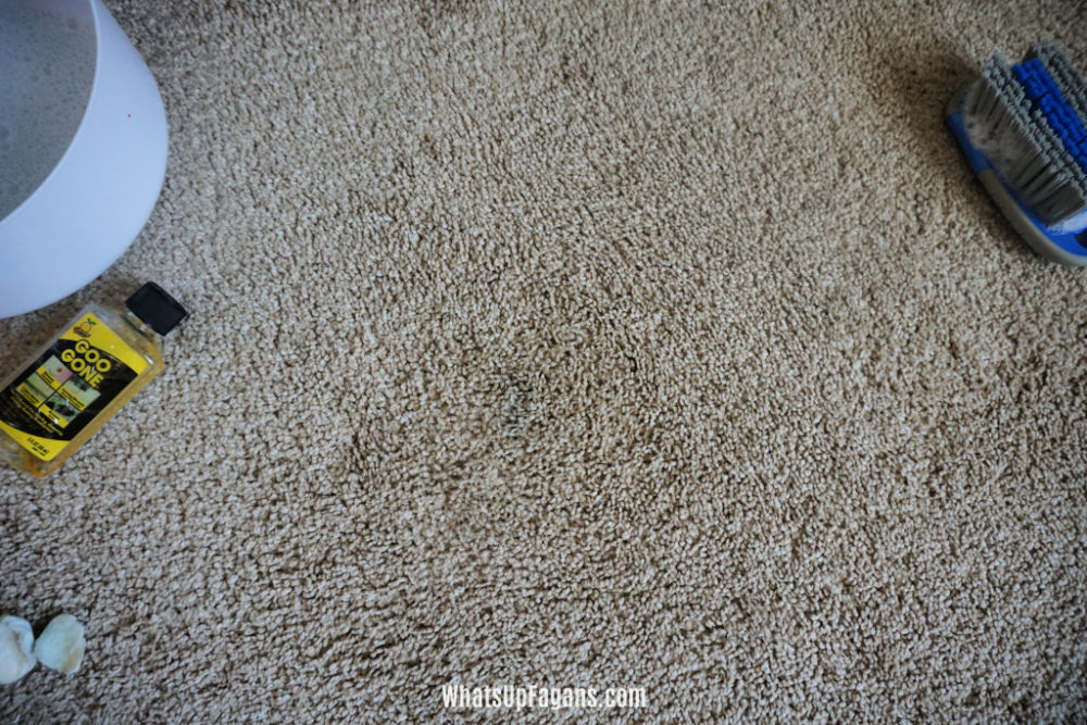 after shot showing how to remove poster putty from carpet, or to get blu tack out of carpet
