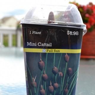 Mini Cattail