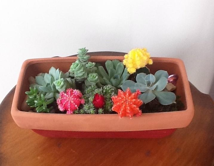 Reader Showcase   Succulent Garden