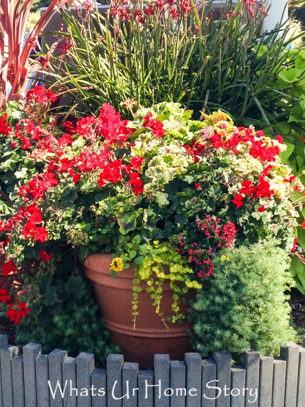 container gardening whats ur