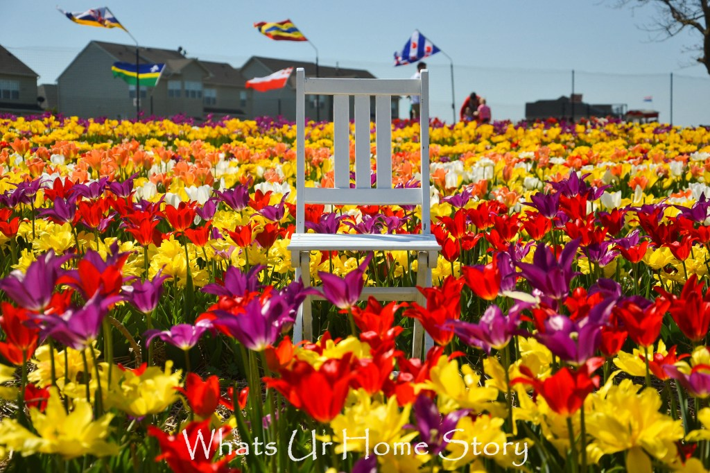 Festival of Tulips @ Burnside Farms