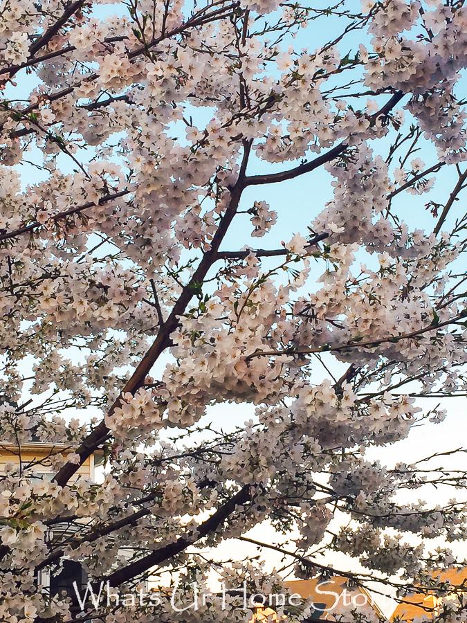 Spring News
