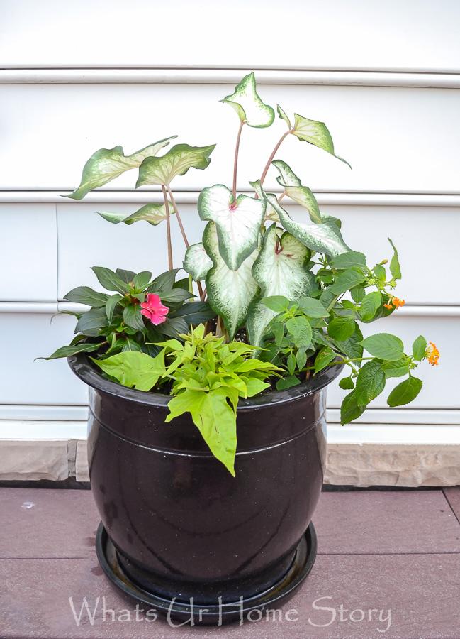 Summer Blooming Container Garden