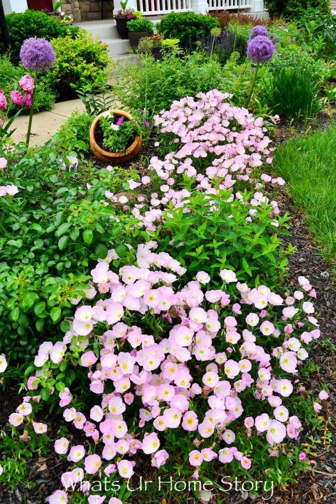 Spring Garden 2018   A Perennial Haven