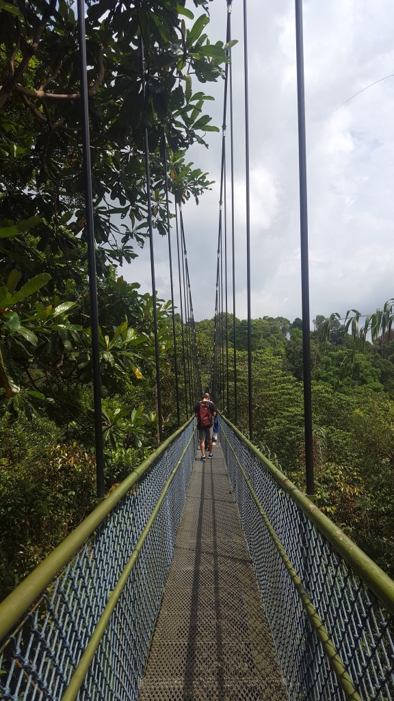Tree Top Walk - MacRitchie Reservoir