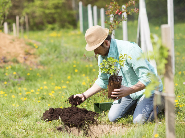 How to Take Care of your Garden