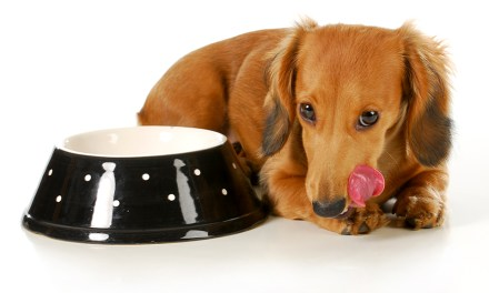 Which Is the Best Dog Food Available in the Market?