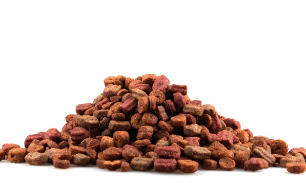 Benefit of Orijen dog food