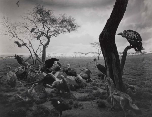 Hiroshi Sugimoto - Black Box