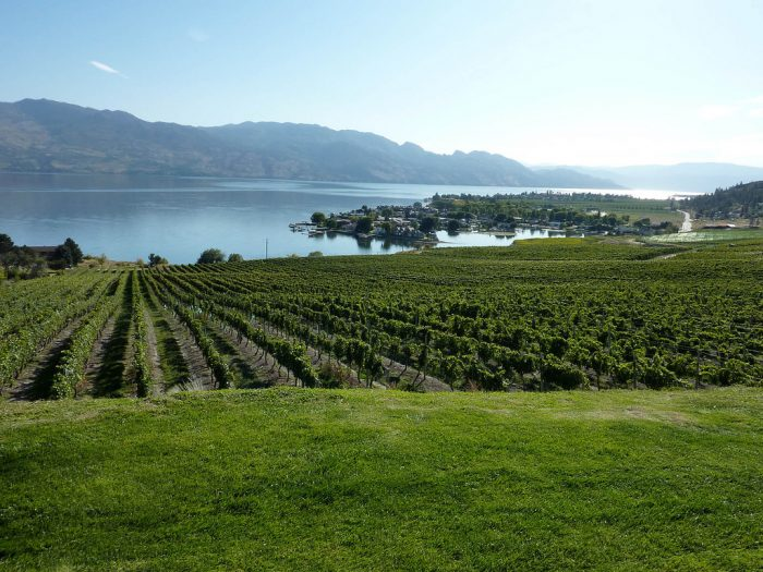 Kelowna_Vineyard_overlooking_Okanagan_Lake