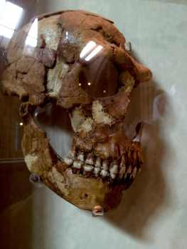 A skull from around 100,000 years before present. Note the full mouth of intact teeth in this adult.