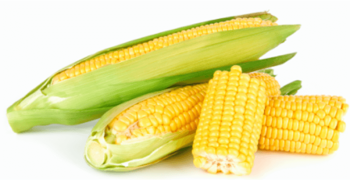 maize lectin free diet