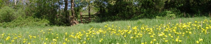Butter cup meadow at Wheatland Farm Eco Lodges