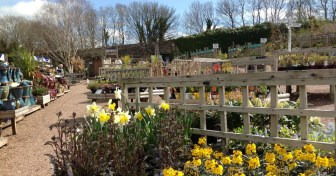 Eggesford garden centre nr Wheatland Farms eco lodges