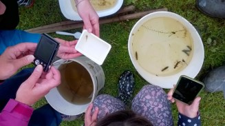 Ponddipping at Wheatland Farm eco lodges