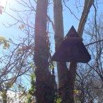 Barn owl box  at Wheatland Farm eco lodges