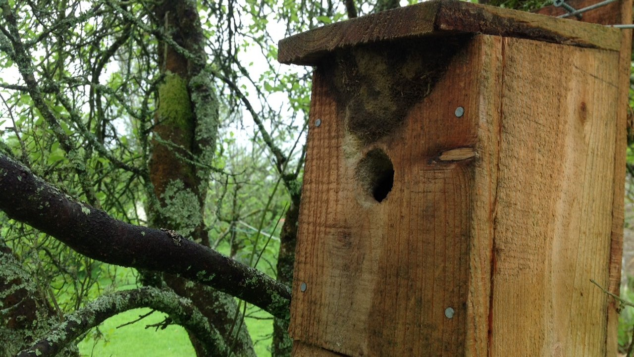 Nuthatches are using this nest box at Wheatland Farm's Devon Eco Lodges