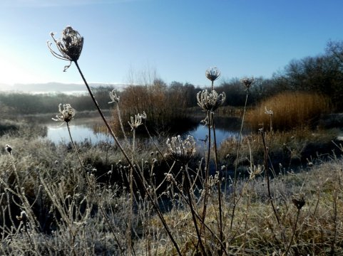 The wildlife pond in winter, Wheatland Farm Devon