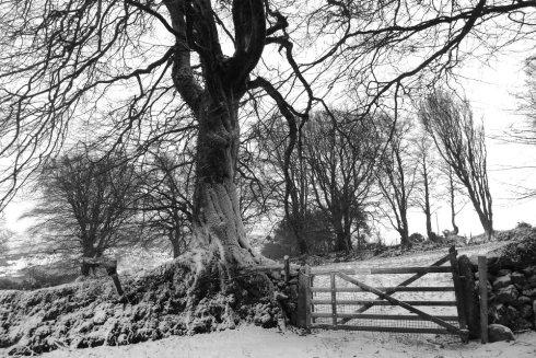 Belstone-wall-Wheatland-Farm-Devon-Eco-Lodge