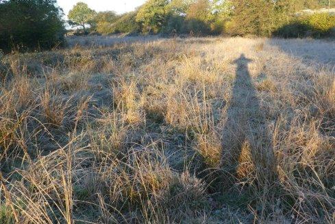 Frosty Popehouse Moor SSSI, Wheatland Farm Devon