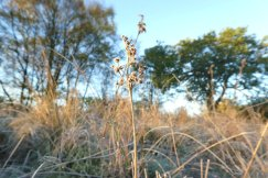 Frost on Popehouse Moor SSSI, Wheatland Farm Devon