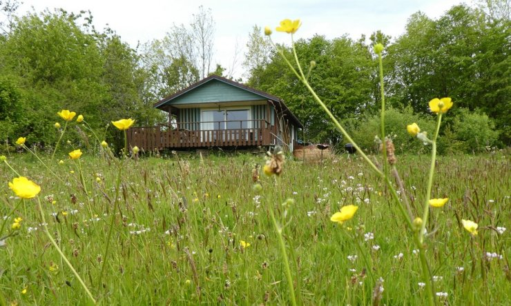 Beech Eco Lodge at Wheatland Farm, Devon, with spring flowers
