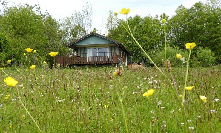 Beech Eco Lodge at Wheatland Farm, Devon, with spring flowers