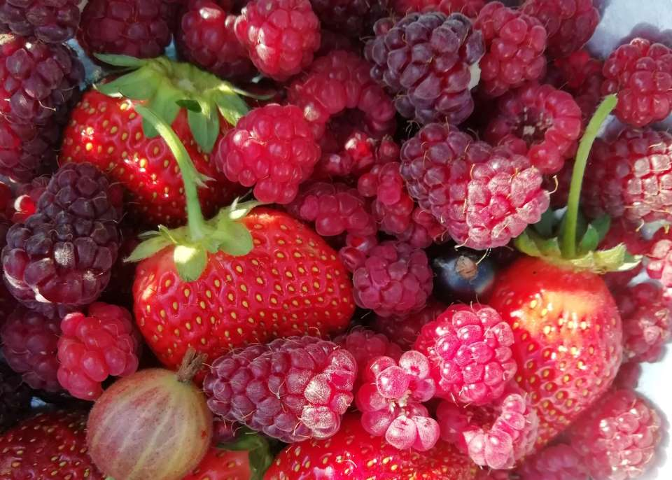 Shows a mix of summer fruits