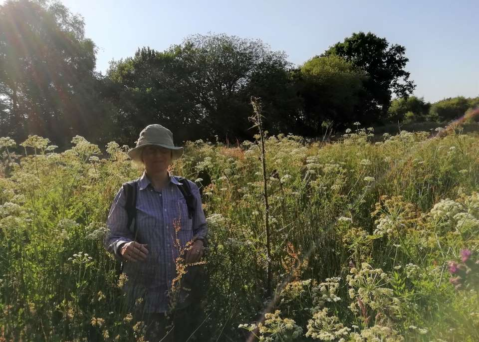 Shows a woman standing amidst flowers on Popehouse Moor SSSI at Wheatland Farm, Devon