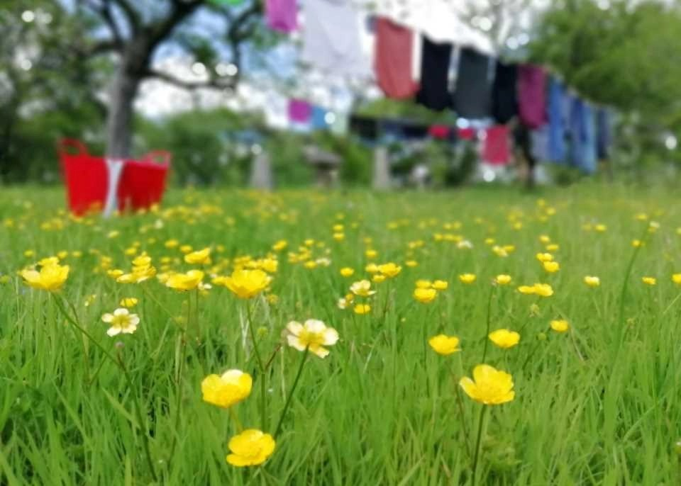 Washing and buttercups at Wheatland Farm's Devon Eco Lodges