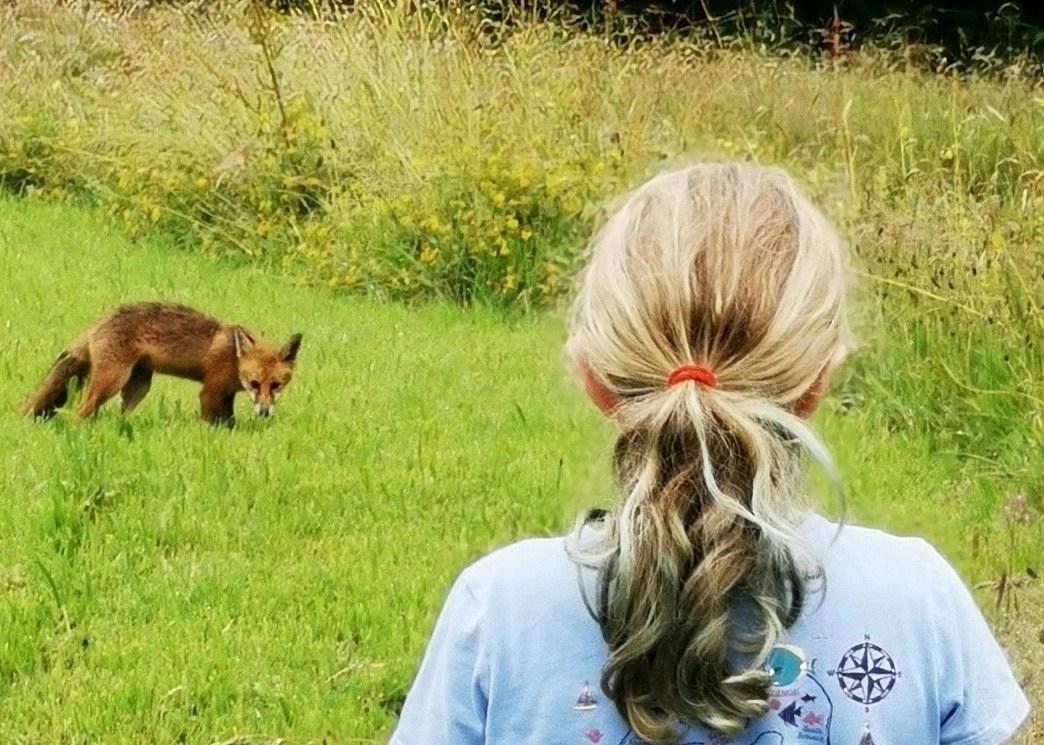 Fox cub and a girl at Wheatland Farm Devon Eco Lodges