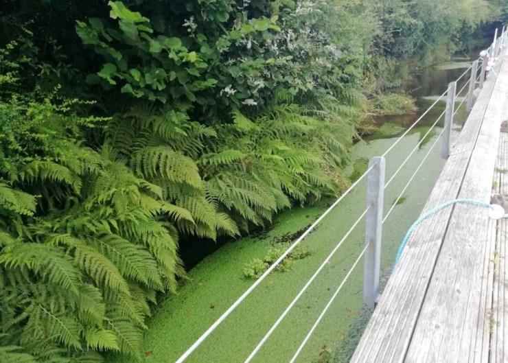The stream feeding Chagford Open Air Swimming Pool