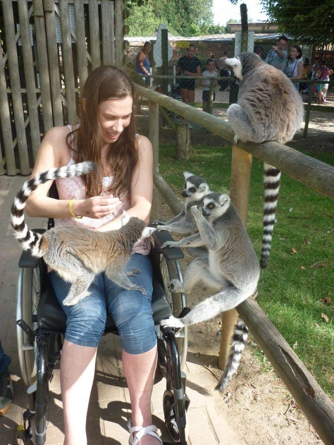 lemurs-wingham-wildlife-park