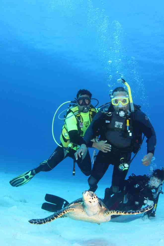 divers and turtle underwater
