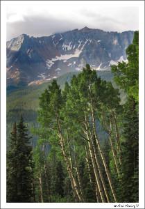 Aspen Trees frame the mountains on Lizard Head Trail