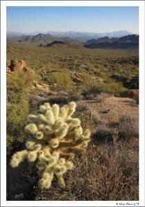 A cactus view