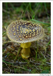 A fine looking shroom